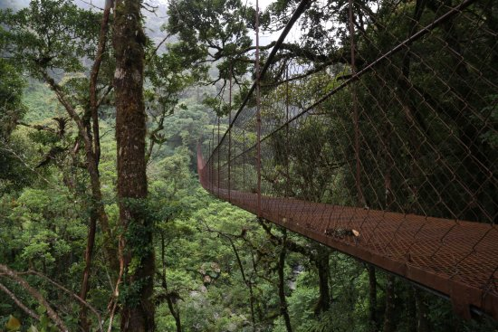 boquete tree trek resort puentes colgantes