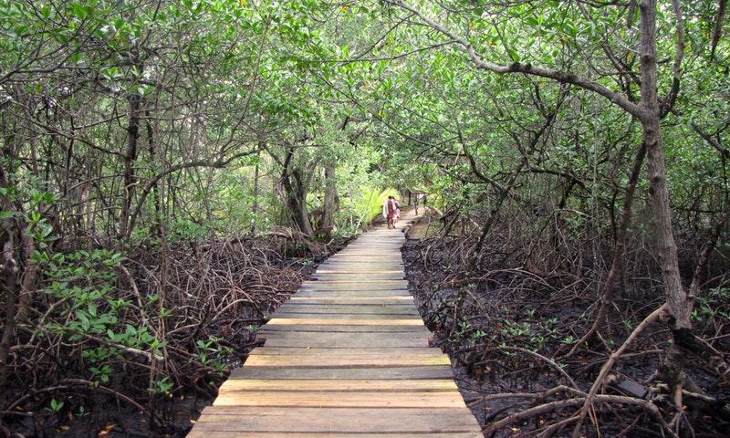 parque nacional isla bastimentos